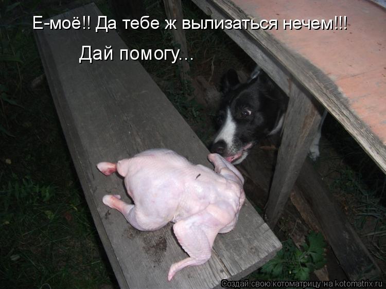 Котоматрица - Е-моё!! Да тебе ж вылизаться нечем!!!  Дай помогу...