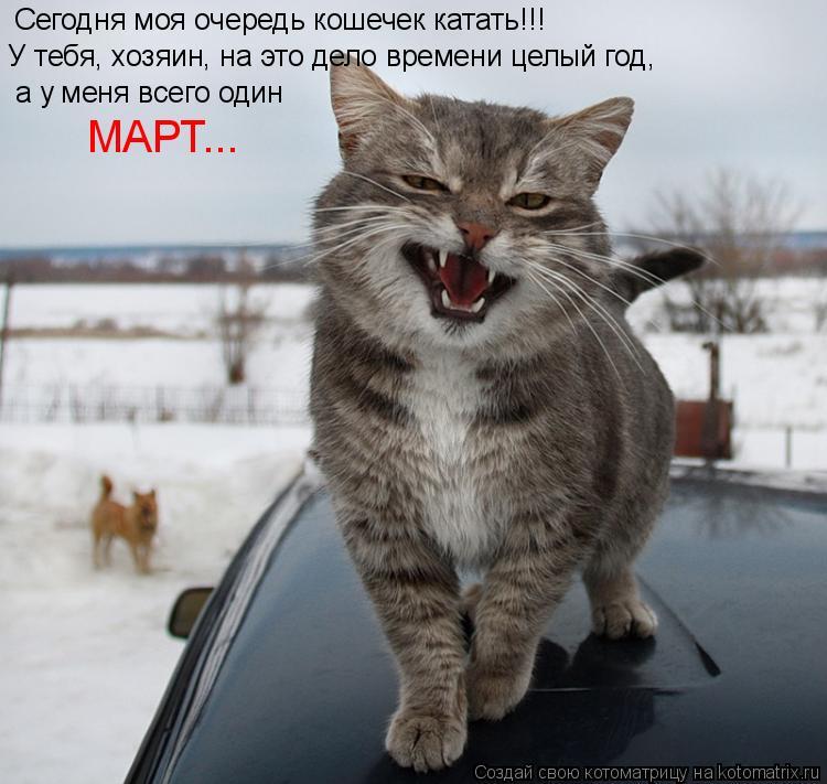 Котоматрица: Сегодня моя очередь кошечек катать!!! У тебя, хозяин, на это дело времени целый год, а у меня всего один МАРТ...