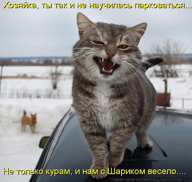 Котоматрица: Хозяйка, ты так и не научилась парковаться... Не только курам, и нам с Шариком весело....