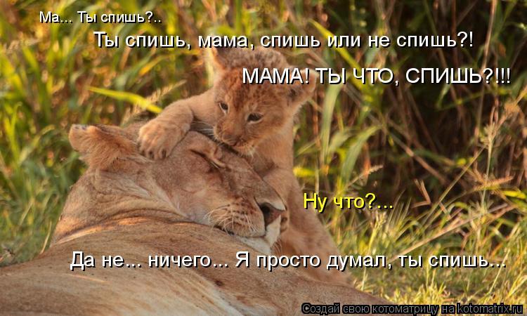 Котоматрица: Ма... Ты спишь?.. Ты спишь, мама, спишь или не спишь?! МАМА! ТЫ ЧТО, СПИШЬ?!!! Ну что?... Да не... ничего... Я просто думал, ты спишь...