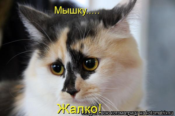 Котоматрица: Мышку..... Жалко!