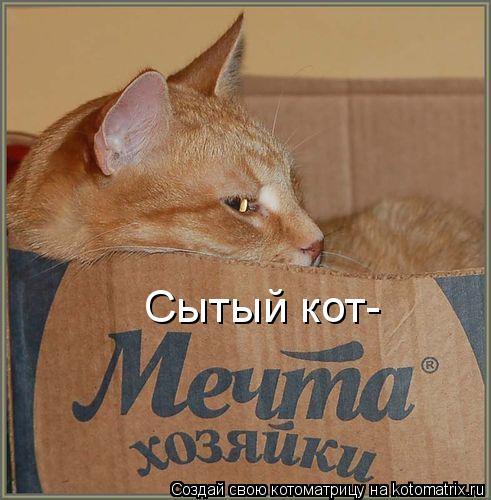 Котоматрица: Сытый кот-