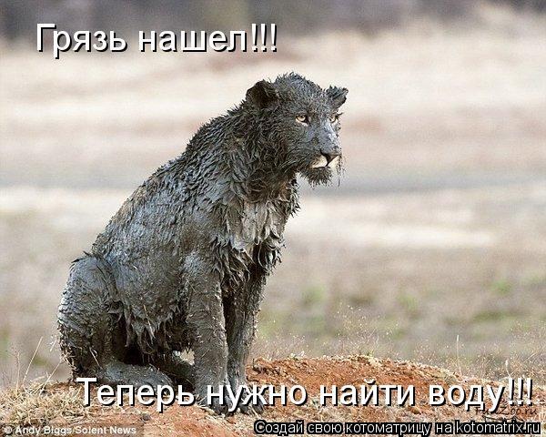 Котоматрица: Грязь нашел!!! Теперь нужно найти воду!!!