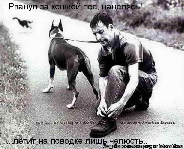 Котоматрица: Рванул за кошкой пес, нацелясь! ...летит на поводке лишь челюсть...