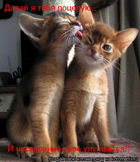 Котоматрица: Давай я тебя поцелую.. И настроение твоё улучшится!!