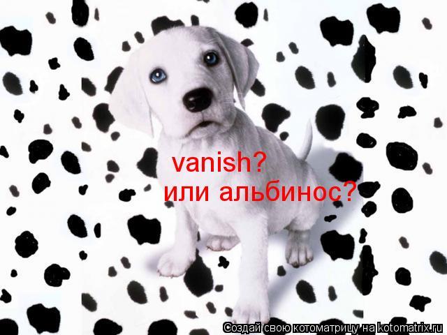Котоматрица: vanish?  или альбинос?