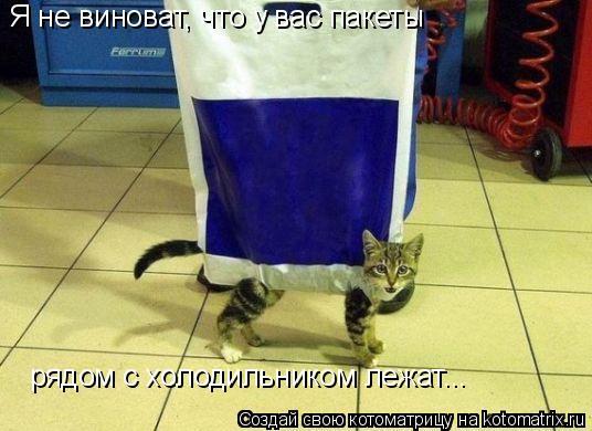 Котоматрица: Я не виноват, что у вас пакеты  рядом с холодильником лежат...