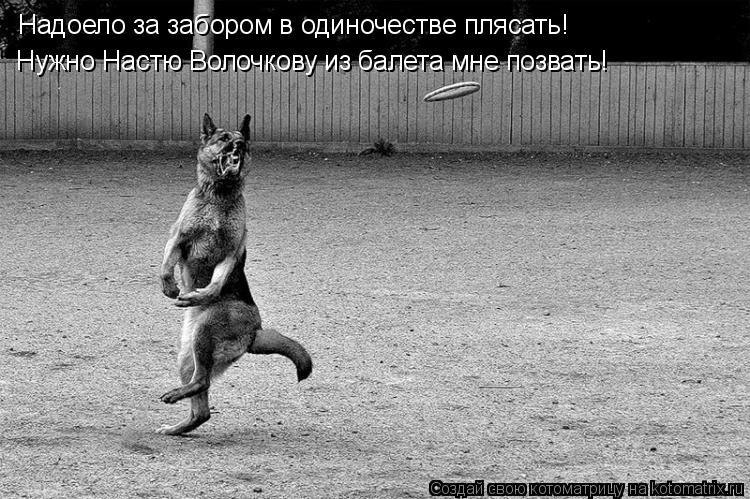 Котоматрица: Надоело за забором в одиночестве плясать! Нужно Настю Волочкову из балета мне позвать!
