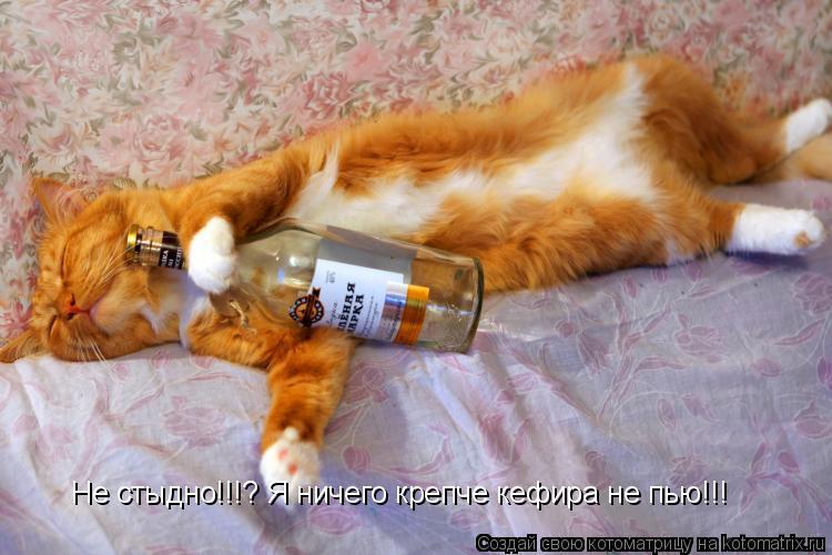 Котоматрица: Не стыдно!!!? Я ничего крепче кефира не пью!!!