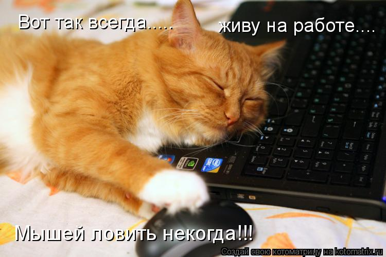 Котоматрица: Вот так всегда..... живу на работе.... Мышей ловить некогда!!!