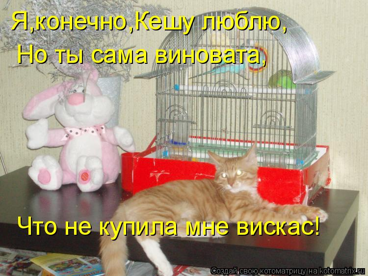 Котоматрица: Я,конечно,Кешу люблю, Но ты сама виновата, Что не купила мне вискас!