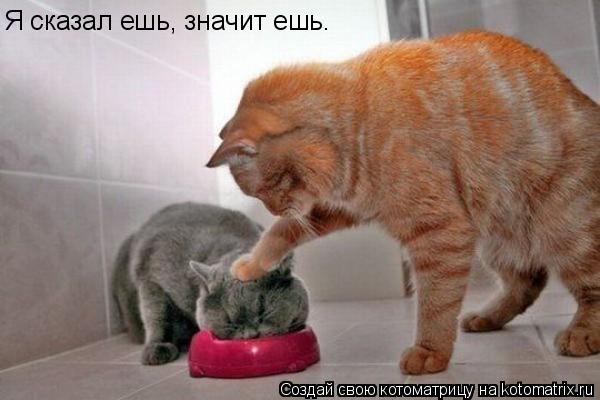 Котоматрица: Я сказал ешь, значит ешь.