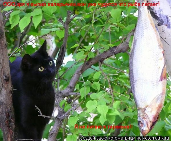 Котоматрица: ООО,зря я выпил валерьянки,вон уже чудится что рыба летает! Я не летаю я таранька!!