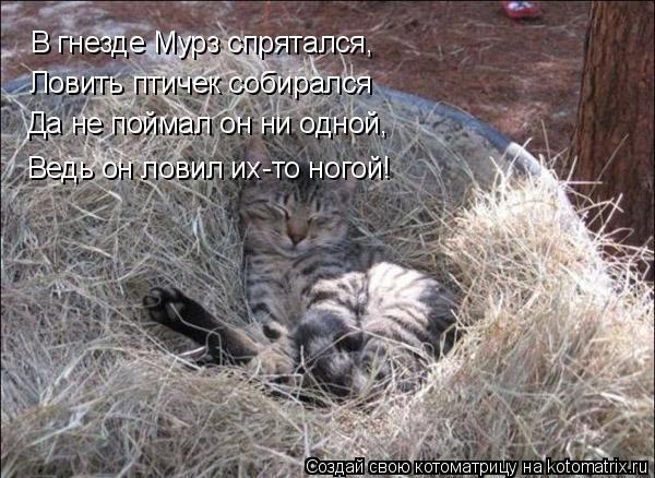 Котоматрица: В гнезде Мурз спрятался, Ловить птичек собирался Да не поймал он ни одной, Ведь он ловил их-то ногой!