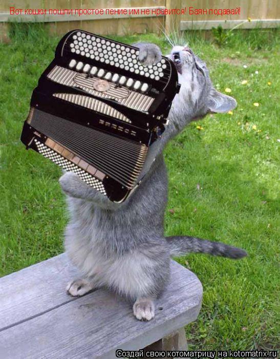 Котоматрица: Вот кошки пошли простое пение им не нравится! Баян подавай!