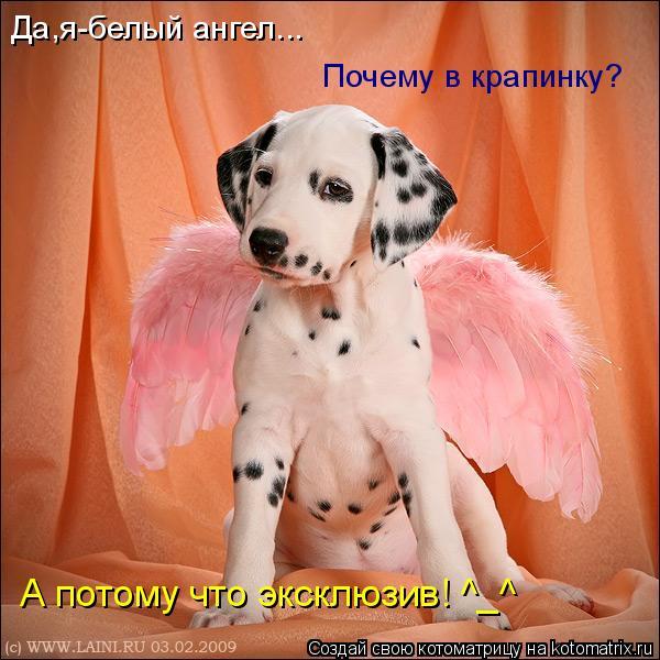 Котоматрица: Да,я-белый ангел... Почему в крапинку? А потому что эксклюзив! ^_^