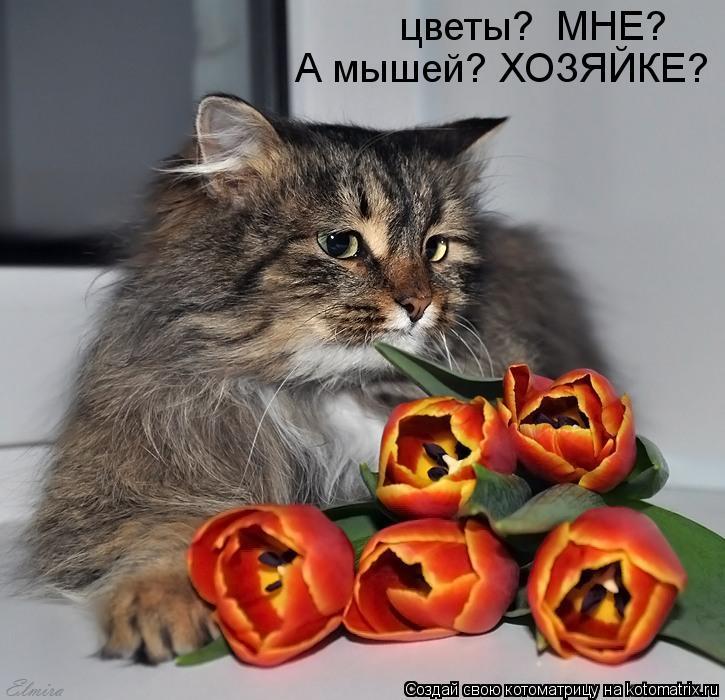 цветы?  МНЕ? А мышей? ХОЗЯЙКЕ?