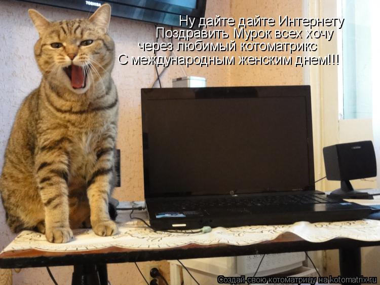 Котоматрица: Ну дайте дайте Интернету Поздравить Мурок всех хочу через любимый котоматрикс С международным женским днем!!!