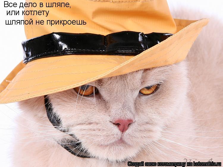Котоматрица: Все дело в шляпе,   или котлету  шляпой не прикроешь
