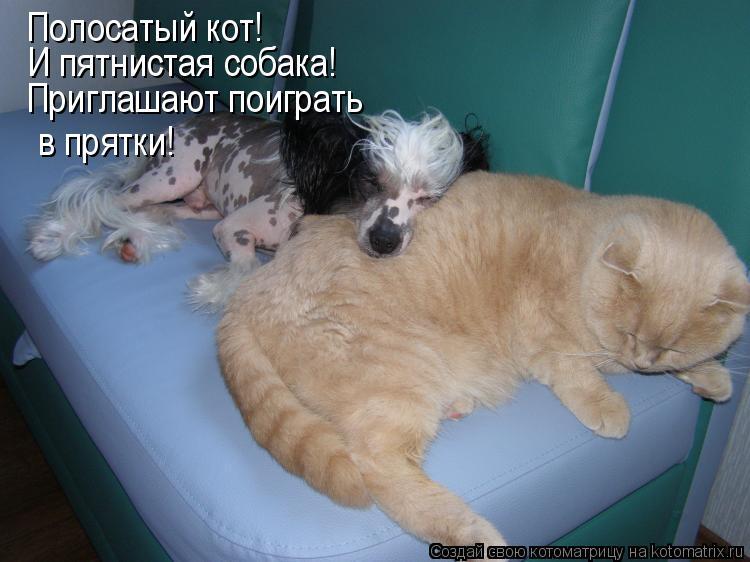 Котоматрица: Полосатый кот! И пятнистая собака! Приглашают поиграть  в прятки!