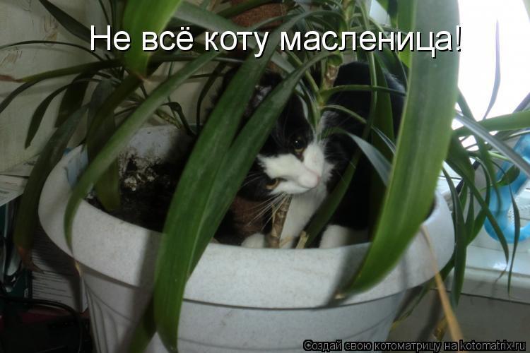 Котоматрица: Не всё коту масленица!