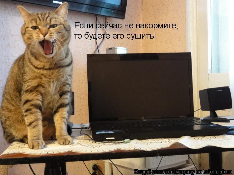 Котоматрица: Если сейчас не накормите, то будете его сушить!