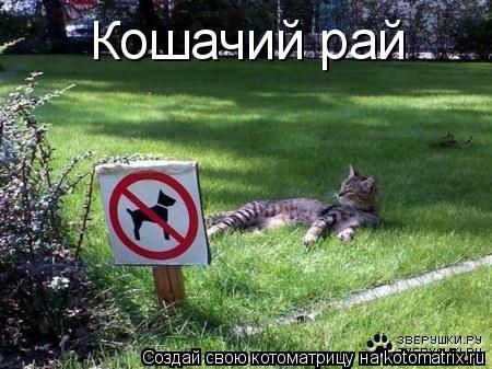 Котоматрица: Кошачий рай