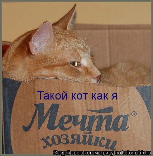 Котоматрица: Такой кот как я