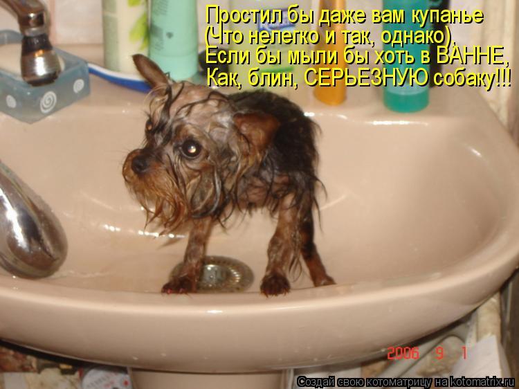 Простил бы даже вам купанье (Что нелегко и так, однако), Если бы мыли