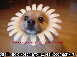 Котоматрица: Мы как цветы но только поздние
