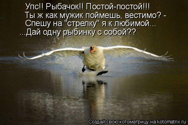 """Котоматрица: Упс!! Рыбачок!! Постой-постой!!! Ты ж как мужик поймешь, вестимо? - Спешу на """"стрелку"""" я к любимой... ...Дай одну рыбинку с собой??"""
