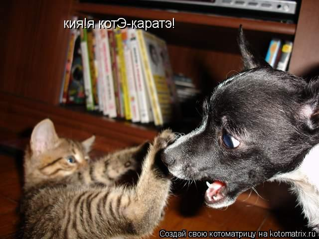 Котоматрица: кия!я котЭ кия!я котЭ-каратэ!