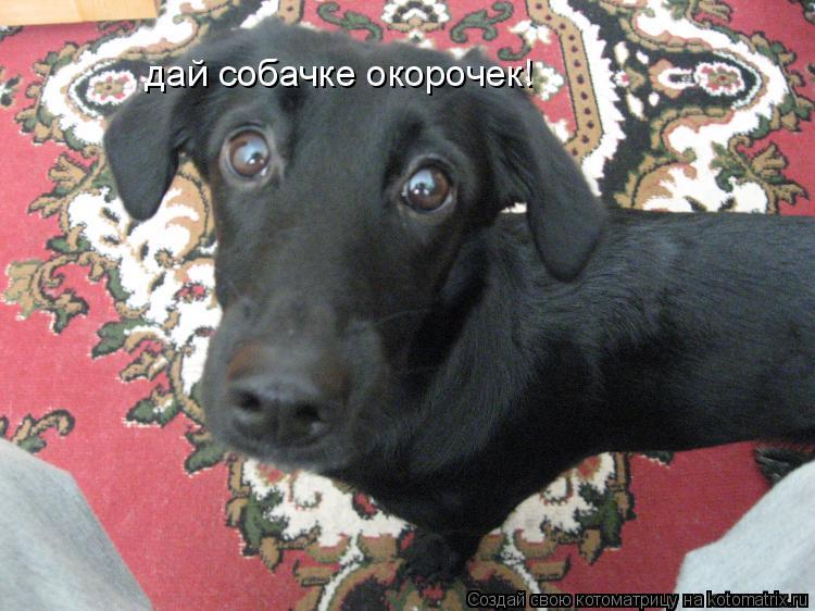 Котоматрица: дай собачке окорочек!