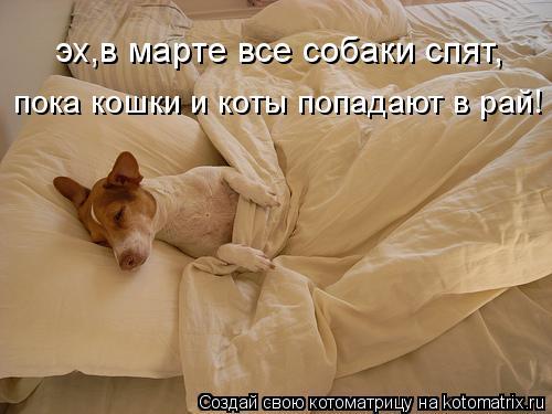 Котоматрица: эх,в марте все собаки спят, пока кошки и коты попадают в рай!