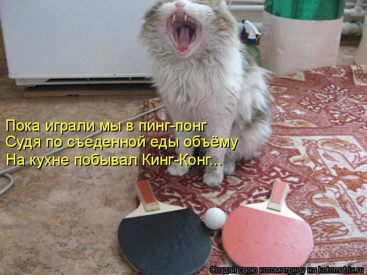 Котоматрица: Пока играли мы в пинг-понг Судя по съеденной еды объёму На кухне побывал Кинг-Конг...