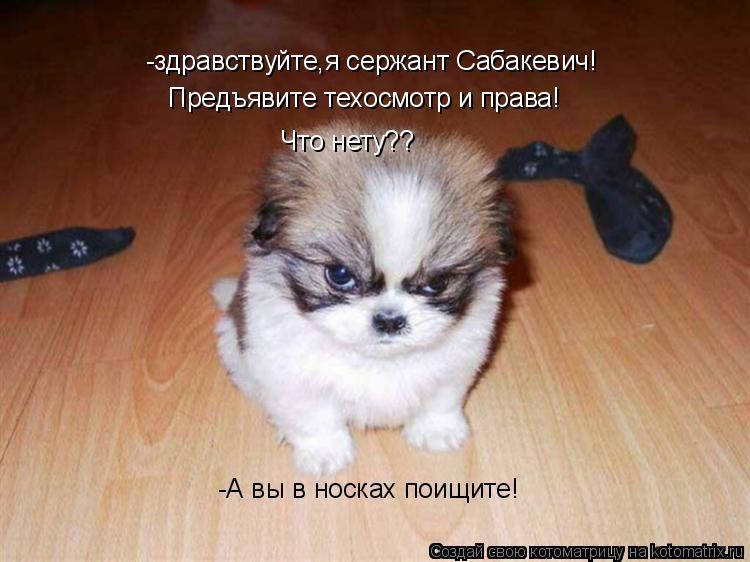 Котоматрица: -здравствуйте,я сержант Сабакевич! Предъявите техосмотр и права! Что нету?? -А вы в носках поищите!