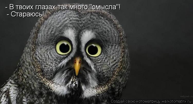 """Котоматрица: - В твоих глазах так много """"смысла""""!   - Стараюсь!"""