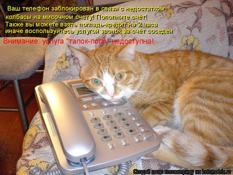 Котоматрица: Ваш телефон заблокирован в связи с недостатком колбасы на мисочном счету! Пополните счёт! Также вы можете взять погладь-кредит на 2 часа Вни