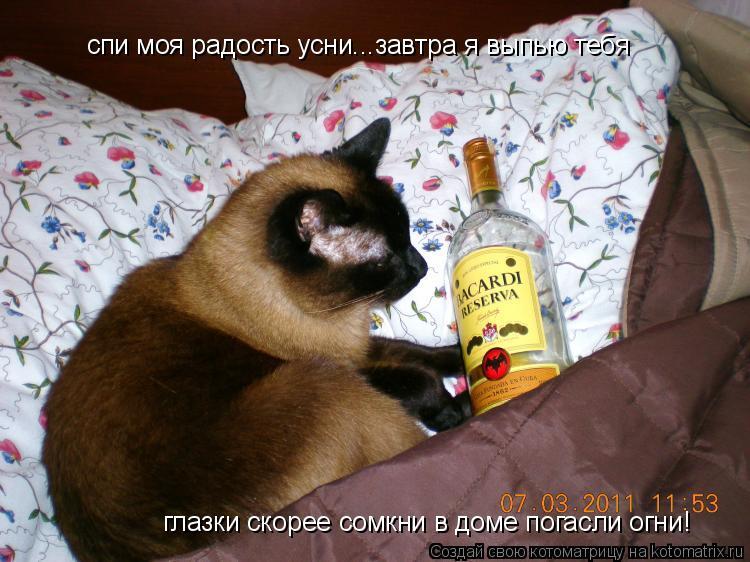 Котоматрица: спи моя радость усни...завтра я выпью тебя глазки скорее сомкни в доме погасли огни!
