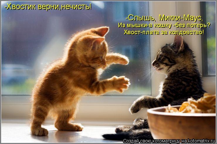 Котоматрица: -Хвостик верни,нечисть! -Слышь, Микки-Маус, Из мышки-в кошку -без потерь? Хвост-плата за колдовство!