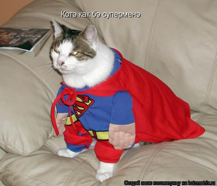 Котоматрица: Котэ как бэ суперменэ