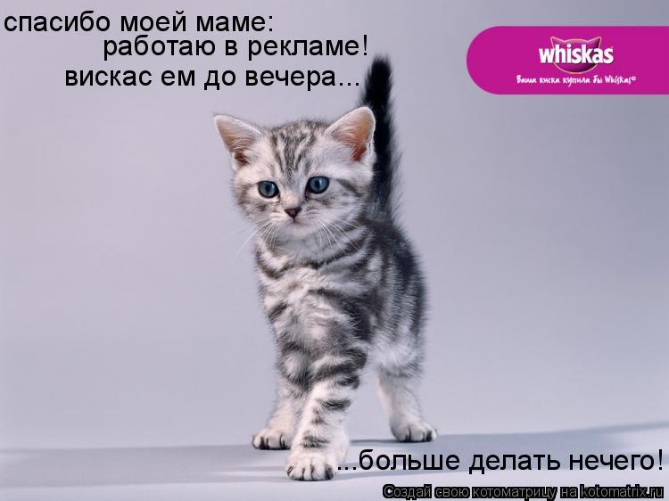Котоматрица: ...больше делать нечего! спасибо моей маме: работаю в рекламе! вискас ем до вечера...