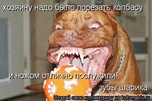 Котоматрица: хозяину надо было порезать колбасу и ножом отлично послужили зубы шарика