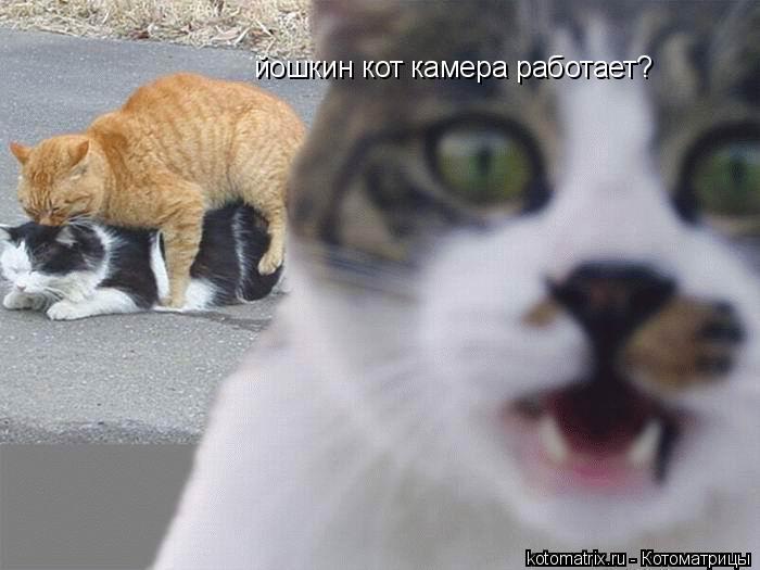 Котоматрица: йошкин кот камера работает?