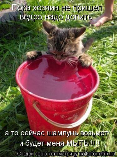 Котоматрица: Пока хозяин не пришел ведро надо допить а то сейчас шампунь возьмет и будет меня МЫТЬ !!!!