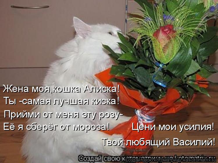 Котоматрица: Жена моя,кошка Алиска! Ты -самая лучшая киска! Прийми от меня эту розу- Её я сберёг от мороза!        Цени мои усилия! Твой любящий Василий!
