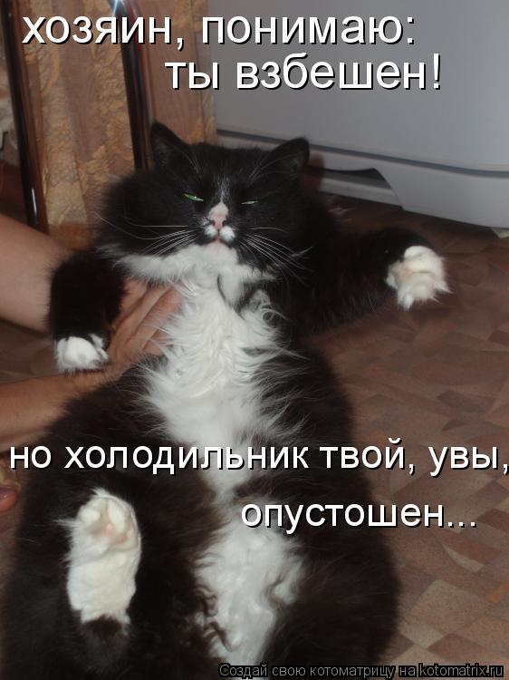Котоматрица: хозяин, понимаю: ты взбешен! но холодильник твой, увы,  опустошен...