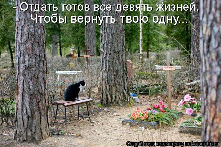 Котоматрица: - Отдать готов все девять жизней, Чтобы вернуть твою одну...
