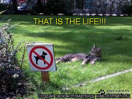 Котоматрица: THAT IS THE LIFE!!!
