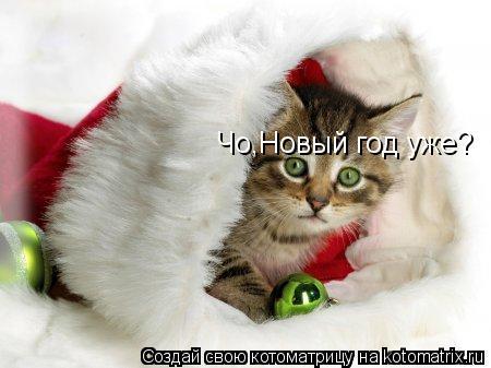 Котоматрица: Чо,Новый год уже?